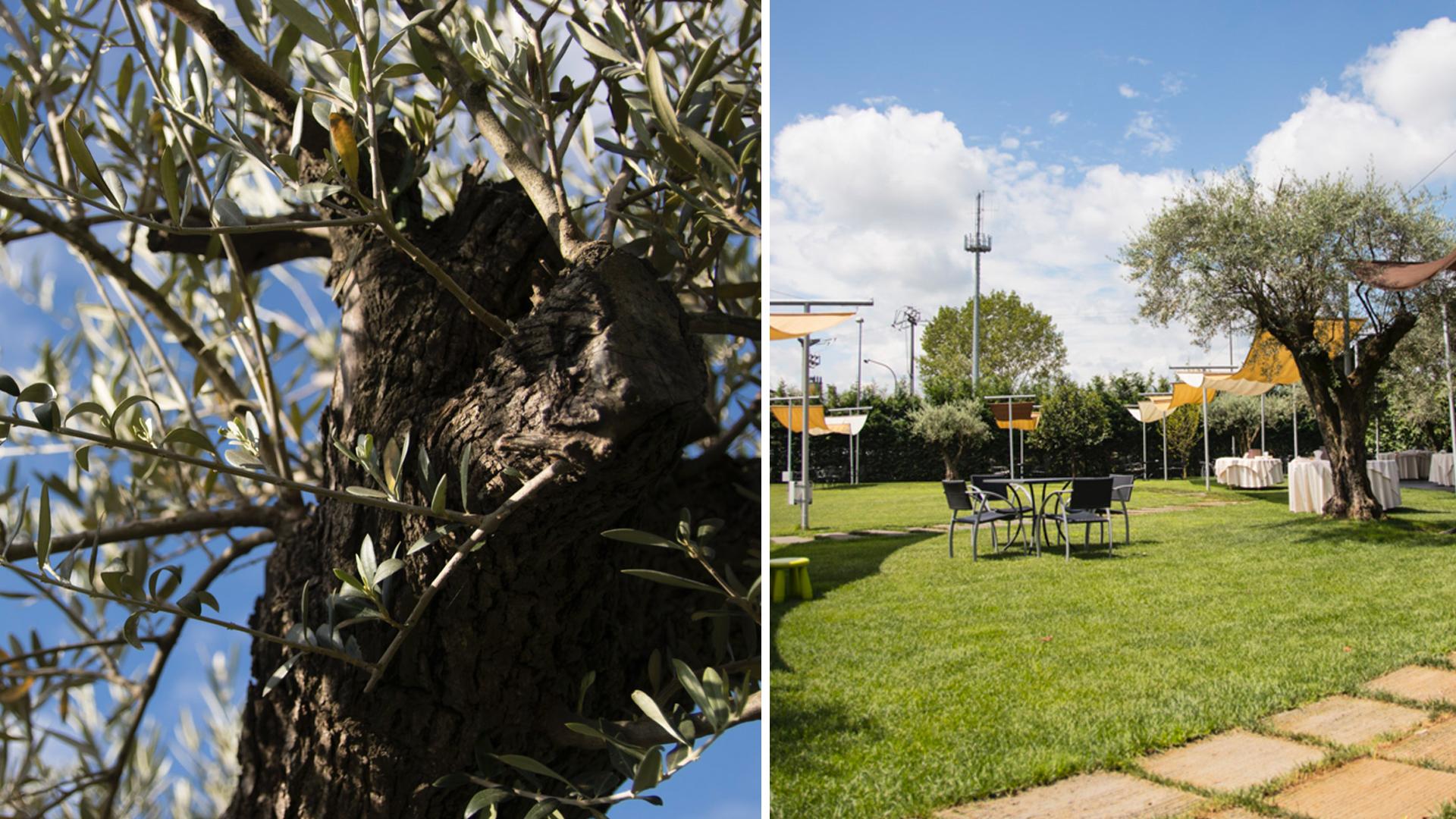 giardino ulivi Porta delle Langhe