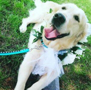 Paola Pavesio wedding pet sitter